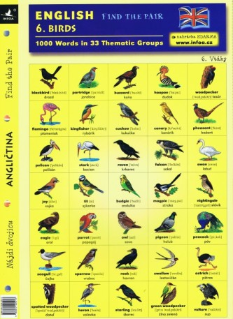 English - Find the Pair 06. (Birds)